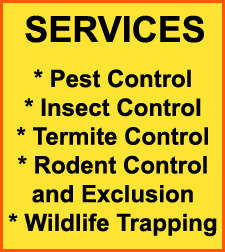 Rodent Control Round Rock, Texas